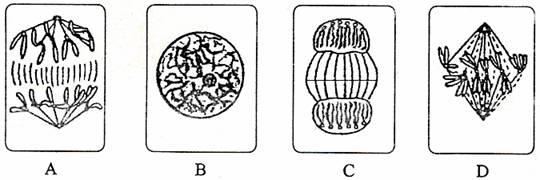 观察根尖分生组织细胞的有丝分裂